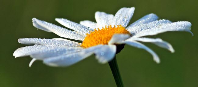 Naturkosmetik ist sanft wie Morgentau auf Blüte